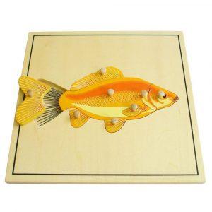 Puzzle Montessori el pez y su esqueleto