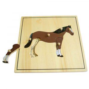 Puzzle Montessori el caballo y su esqueleto