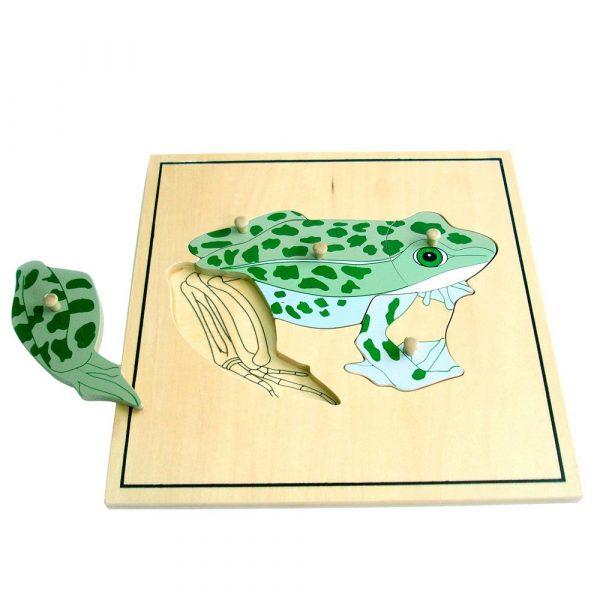Puzzle Montessori la rana y su esqueleto
