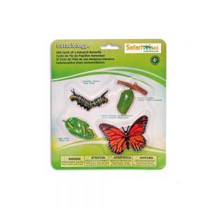 Ciclo de la vida mariposa