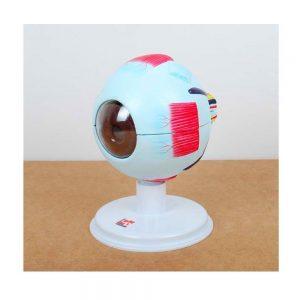 Maqueta del ojo humano
