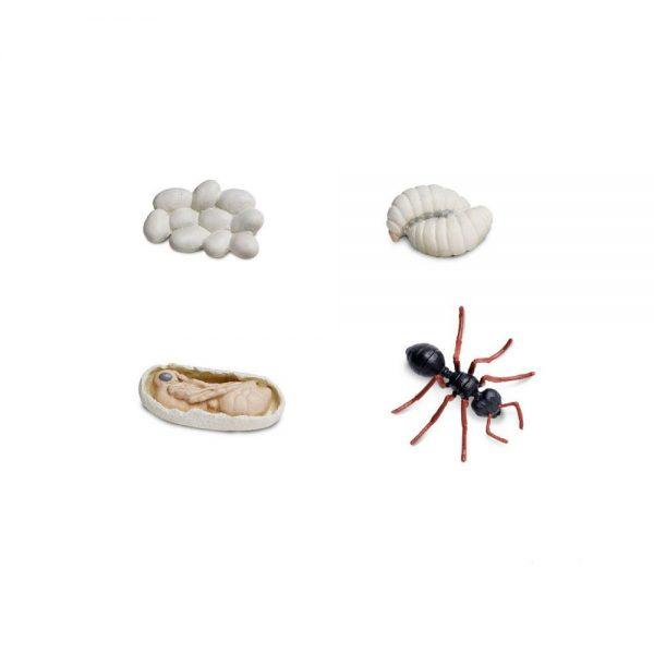 Ciclo de la vida hormiga