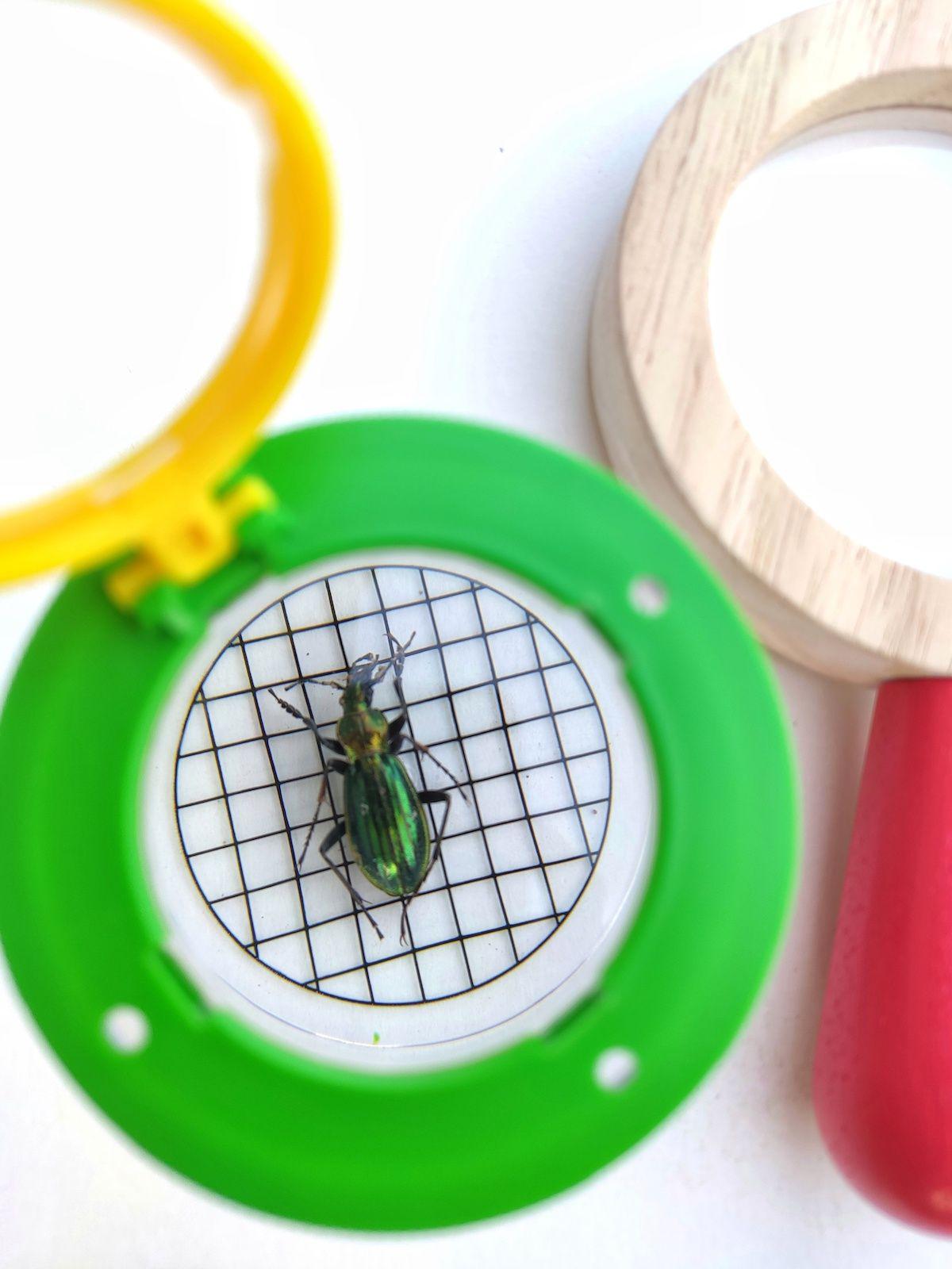 insectos-4