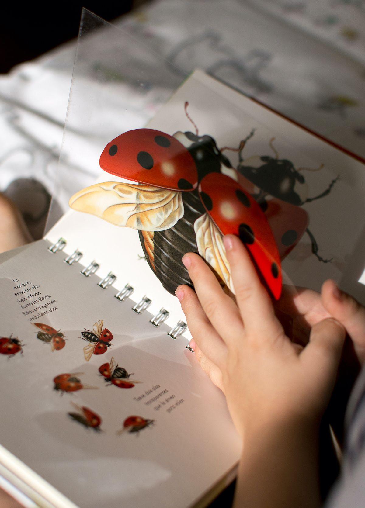 insectos-6