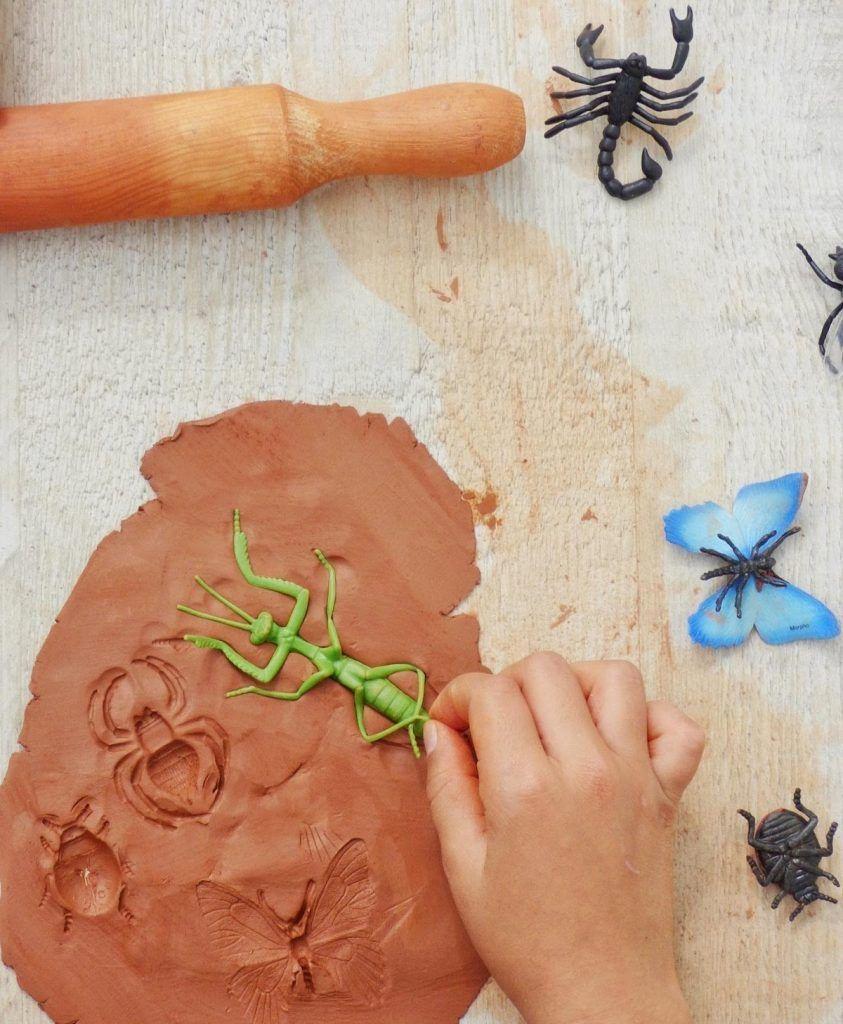 arcilla e insectos
