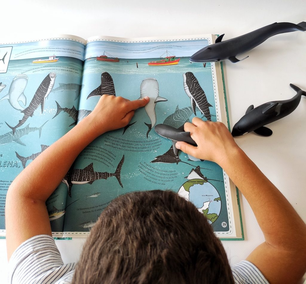 oceanos-animales, libro